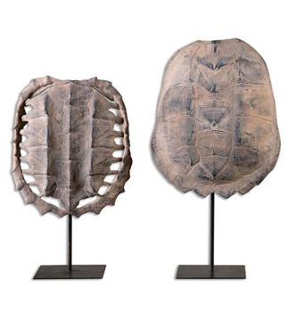 Picture of TURTLE SHELL-VARIES/PRICE PER PIECE