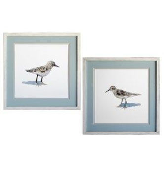 Picture of SAND PIPER-VARIES/PRICE PER PIECE
