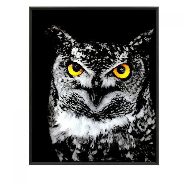 Picture of HOOT